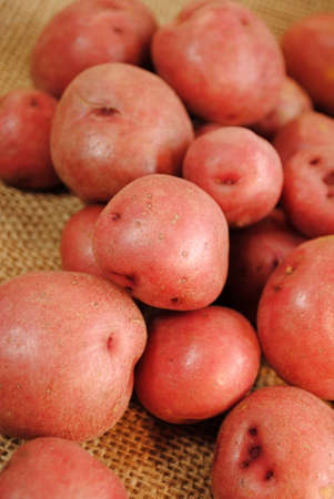 sackcloth: Fresh Harvested Red Potatoes