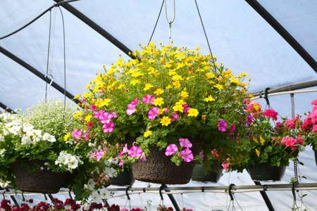 nurseries: Hanging Greenhouse Plant