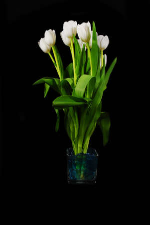 White Tulips Over Black photo