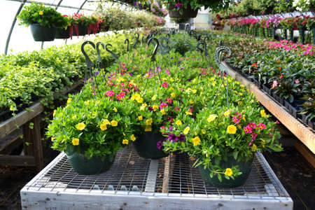 nurseries: Plants in the Greenhouse Editorial