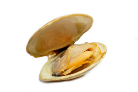 Fresh Steamed Clam Isolated on White photo