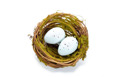 Birds Nest with Two Bird Eggs Stock Photo