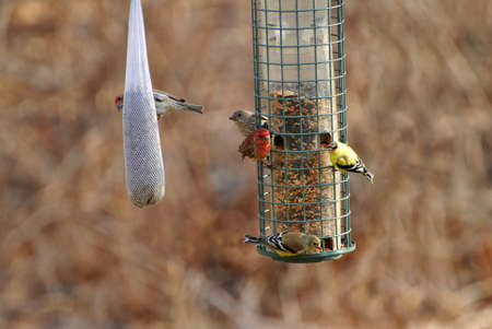natureal: Busy Bird Feeder Eary in Spring