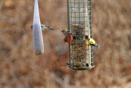 natureal: Impegnato Bird Feeder Eary in primavera Archivio Fotografico