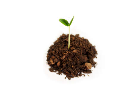 seeding: Soil with a Cucumber Seeding Growing Stock Photo