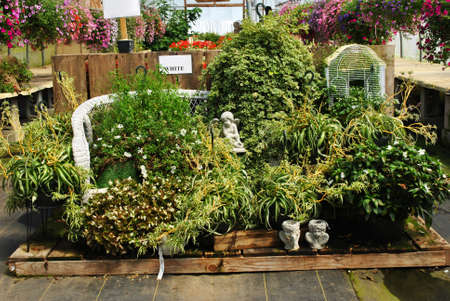 nurseries: A Display of Plants in a Greenhouse