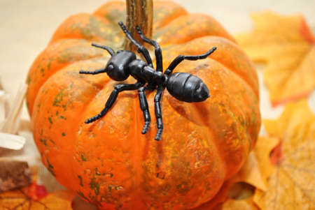 Concept of a Black Ant on a Pumpkin photo
