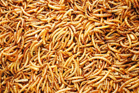 mealworm: A Background of Dried Meal Worms