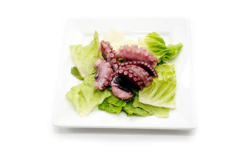 촉수: Octopus Tentacle Appetizer with Romain Lettuce 스톡 사진