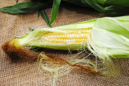 Corn on the Cob with Part of it Peeled