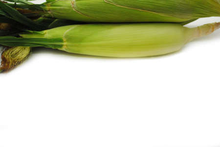 Fresh Corn Cobs with Copy Space on the Bottom