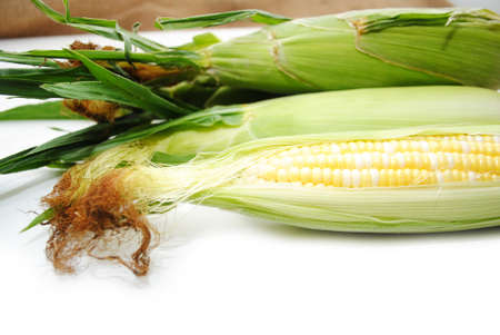Fresh Picked Corn on the Cob