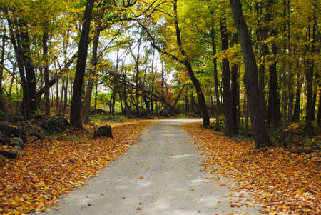 dirtied: Fall Foliage on a Country Dirt Road Stock Photo