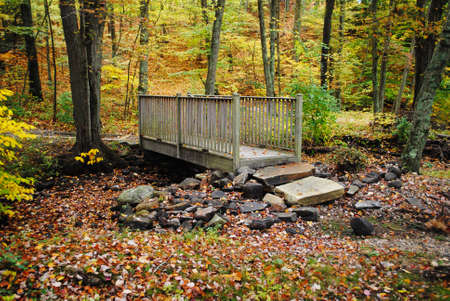 bridged: Wooden Bridge in the Forest During Fall