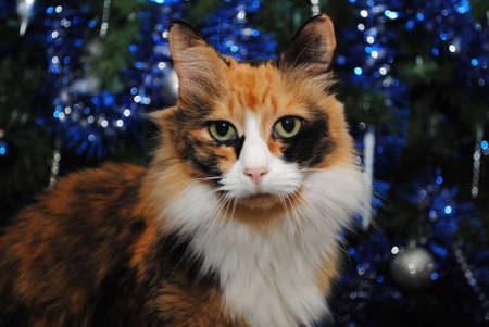 calico cat: Calico Cat in Front of a Decorated Christmas Tree