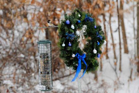 evergreen wreaths: Wild Birds Enjoying a Holiday Meal of Seeds