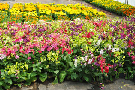 Flowers in Full Bloom Growing in a Greenhouse