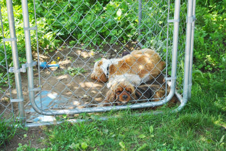 trapped: Two Lonely Dogs in a Small Kennel Cage Outside