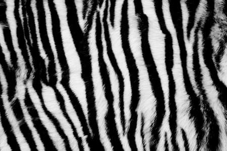 Black and White Animal Fur Background Stock Photo - 6594787