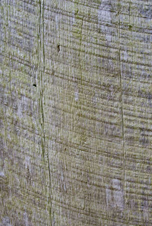 Very colorful natural wood background Stock Photo - 8697629
