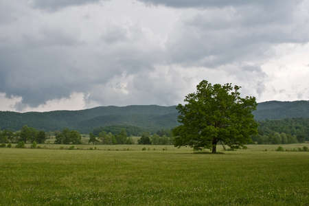 Mountain pasture landscape with cloudy skies