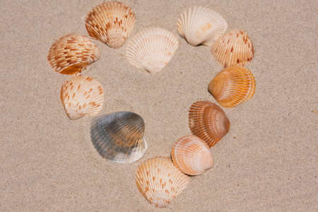 Heart shaped design made of seashells on the sand Stock Photo - 10194967