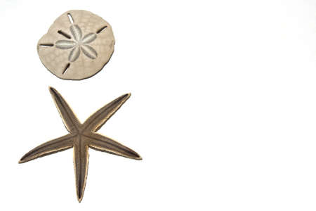 Sanddollar and Starfish on a white background
