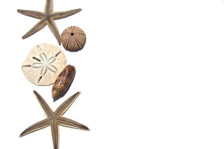 Mixed Seashells and Starfish Background isolated on white background Stock Photo - 10260846
