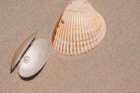 Seashell And Oyster shell with pearl inside