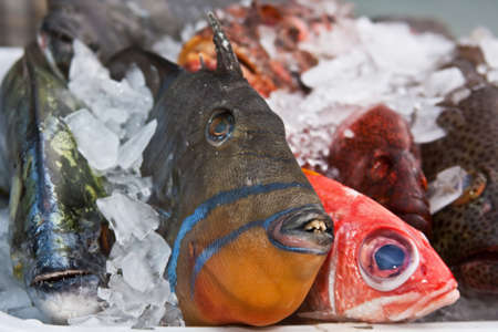 Variety of fresh caught fish laying on a bed of ice photo