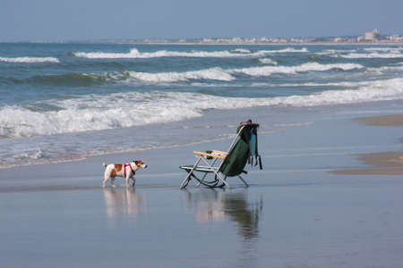 Dog on the beach with his beach chair  Stock Photo
