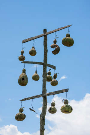 dried gourd: Gourd bird houses hanging from a homemade pole