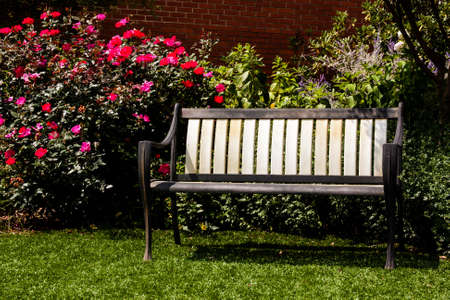 Bench in the garden with red roses blooming