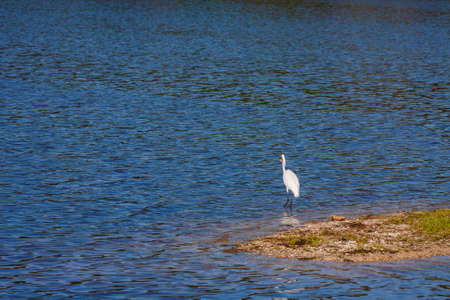wetland conservation: White Egret standing on a tree stump at a bird sanctuary Stock Photo
