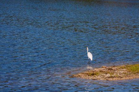bird sanctuary: White Egret standing on a tree stump at a bird sanctuary Stock Photo