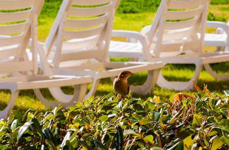 Sparrow up close on a bush
