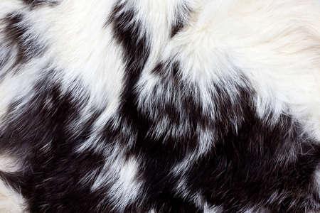 Black and white animal fur background  版權商用圖片