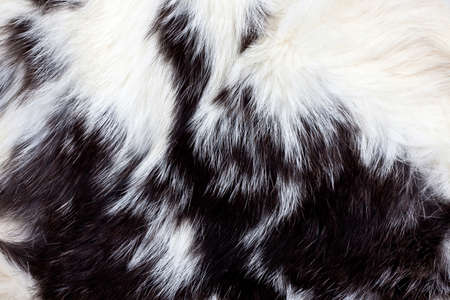 Black and white animal fur background  Stock Photo