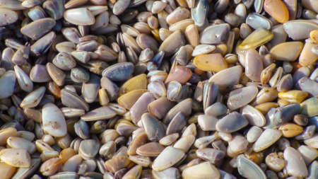 Large group of small seashells at the beach
