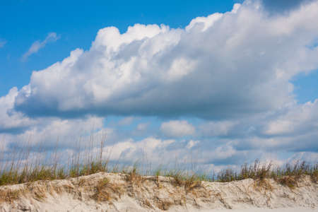 Sand dunes with seaoats on the beach