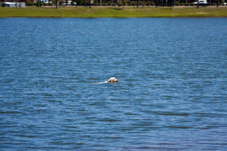 Dog swimming in the lake at the park Banque d'images