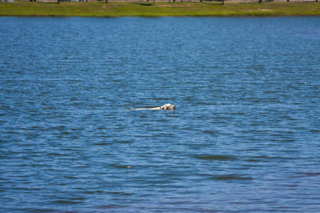 Dog swimming in the lake at the park Stock Photo