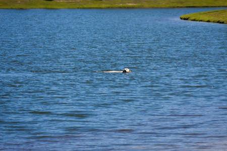 Dog swimming in the lake at the park 版權商用圖片