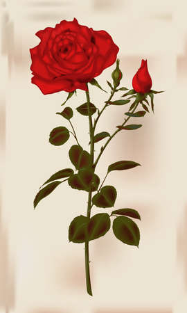 illustration of a red rose Vector