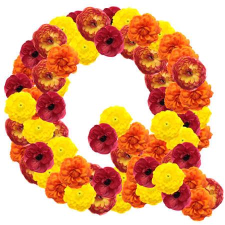 chicory flower: Alphabet of flowers isolated on white background