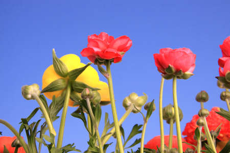 Spring flowers against clear blue sky Stock Photo - 4738462