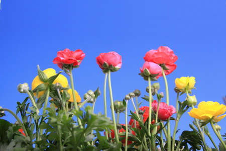 Spring flowers against clear blue sky photo