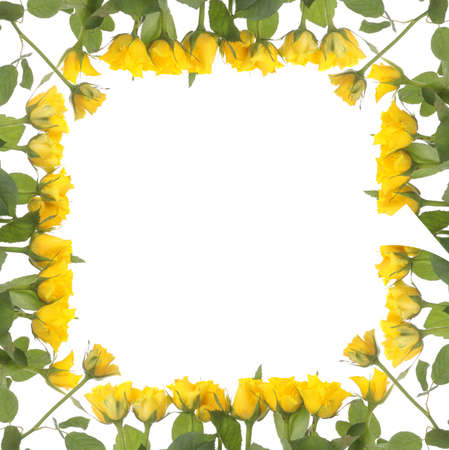 Frame made from yellow roses isolated on white background