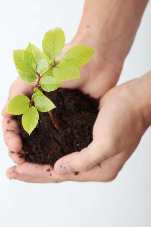 Growing green plant in a hands over white background