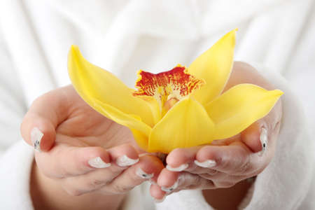Beautiful yellow orchid in palms against white Stock Photo - 6247146